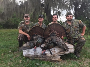 <p>2 Osceolas turkey killed first weekend. </p>